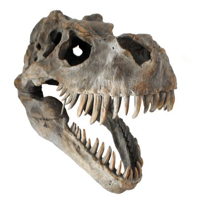 T-Rex Skull Wall Head Trophy Art