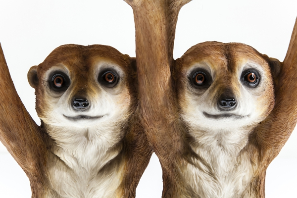 close up faces of Meerkat Sisters Side Table